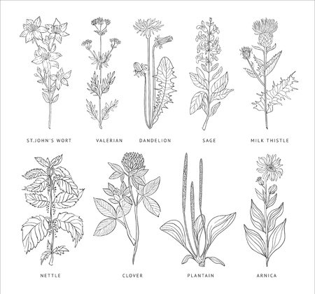 Medical Herbs Vector Set. Hannd drawn Monochrome Style Çizim