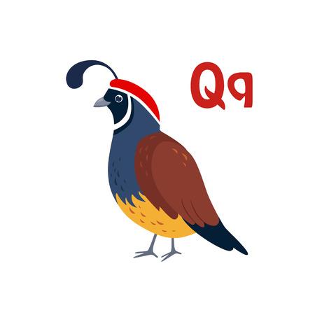 Quail. Funny Alphabet, Colourful Animal Vector Illustration Imagens - 51462114