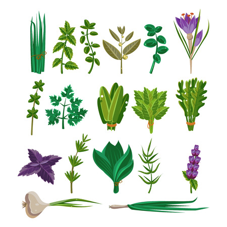 white flower: Cooking Herbs Collection Items Flat Vector Design On White Background Illustration