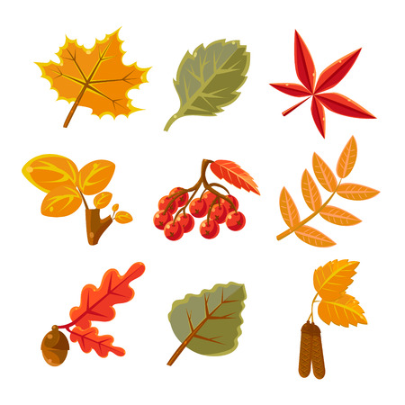 asp: Autumn Common Forest Leaves Set Flat Vector Design Isolated Items On White Background