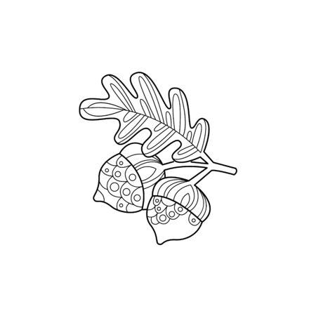 acorns: Acorns And Leaf Hand Drawn Illustration