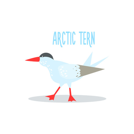 tundra: Arctic Tern Drawing For Arctic Animals Collection Of Flat Vector Illustration In Creative Style On White Background Illustration