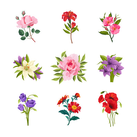 lily flowers: Garden Flowers Hand Drawn Vector Design Set Of Separated Icons In Realistic Style