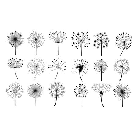 Las semillas de diente de león mullidas flores dibujado a mano del estilo del Doodle Negro y negro de dibujo vectorial de conjunto de iconos
