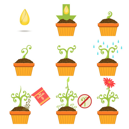 growing plant: Planting The Seed Step By Step Istruction Cartoon Simple Style Flat Vector Illustrations Set On White Background