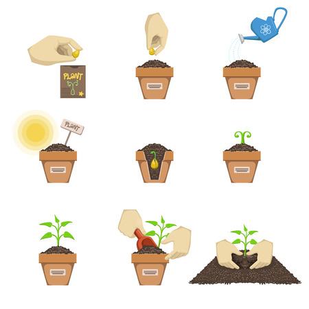 씨앗 시퀀스 만화 간단한 스타일 흰색 배경에 설정 평면 벡터 일러스트 심기