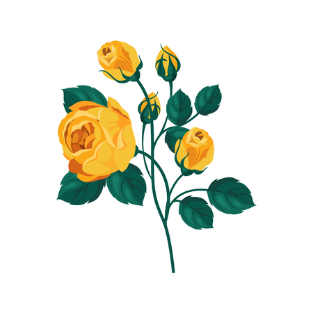 yellow rose: Yellow Rose Hand Drawn Realistic Flat Vector Illustration In Artistic Painting Style On White Background Illustration
