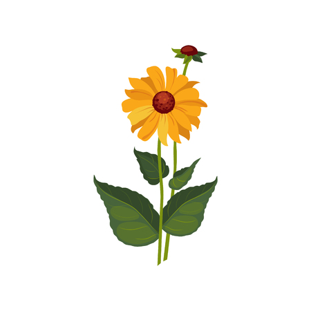dahlia: Dahlia Hand Drawn Realistic Flat Vector Illustration In Artistic Painting Style On White Background Illustration