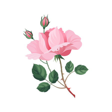 aquarelle painting art: Rose Hand Drawn Realistic Flat Vector Illustration In Artistic Painting Style On White Background