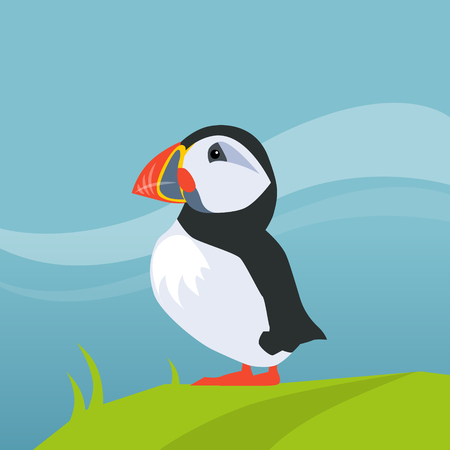 puffin: Puffin Bird In Iceland Flat Bright Color Simplified Vector Illustration In Realistic Cartoon Style Design Illustration