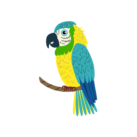 macaw parrot: Blue Macaw Parrot Flat Isolated Colorful Vector Design Illustration On White Background