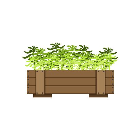 planted: Plants In A Wooden Crate Bright Color Simple Style Flat Vector Illustrations On White Background