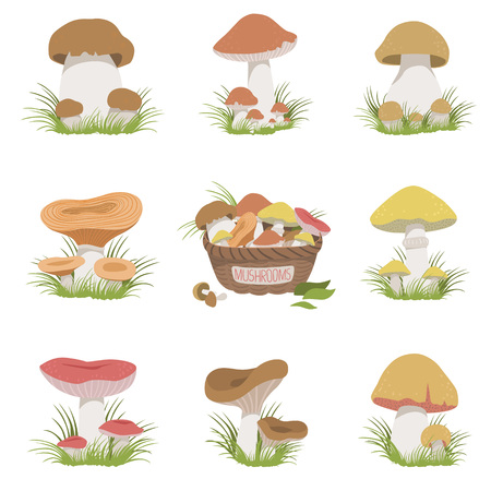cep: Eatable Mushrooms Realistic Set Of Flat Pale Color Detailed Drawings Isolated In White Background Illustration