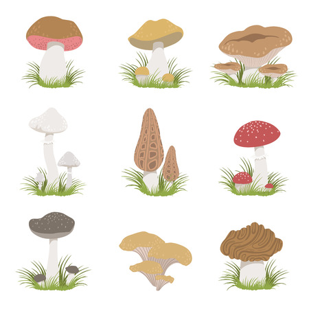 pale color: Different Mushrooms Realistic Set Of Flat Pale Color Detailed Drawings Isolated In White Background