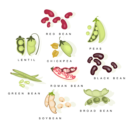 roman beans: Bean Cultures With Names Set Flat Realistic Bright Color Infographic Illustration On White Background