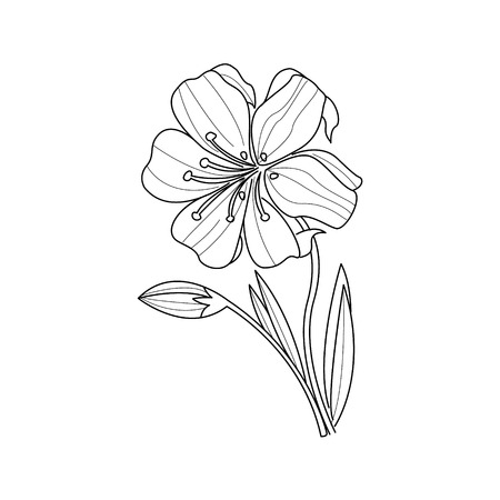 marigold: Marigold Flower Monochrome Drawing For Coloring Book Hand Drawn Vector Simple Style Illustration
