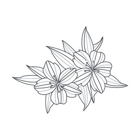 Flor De Peonía Dibujo Monocromo Para Colorear Libro Dibujado A Mano ...