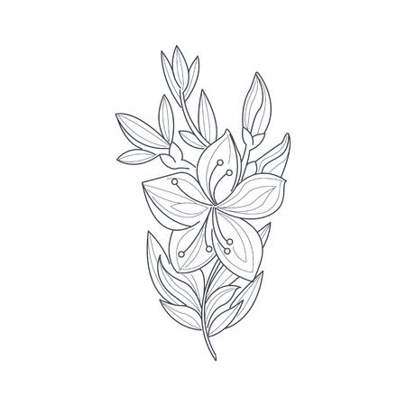Jasmin-Blumen-Monochrom-Zeichnung für Malbuch Hand gezeichnet Vektor-einfache Art-Illustration Vektorgrafik
