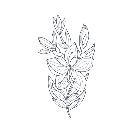 Jasmine Flower Monochrome Drawing For Coloring Book Hand Drawn Vector Simple Style Illustration