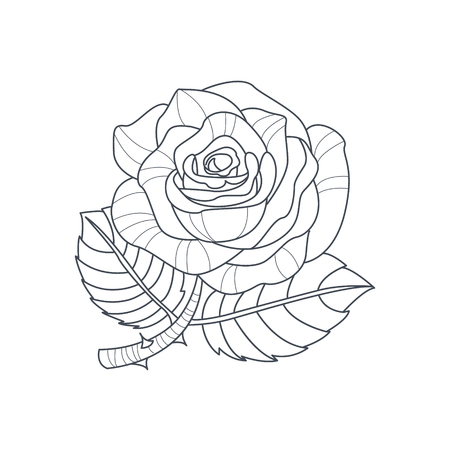 Rose Flower Monochrome Drawing For Coloring Book Hand Drawn Vector Simple Style Illustration
