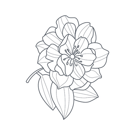 fully: Fully Open Peony Flower Monochrome Drawing For Coloring Book Hand Drawn Vector Simple Style Illustration