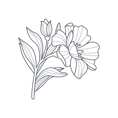 calendula flower: Calendula Flower Monochrome Drawing For Coloring Book Hand Drawn Vector Simple Style Illustration Illustration