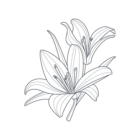 single flower: Two Lilies Flower Monochrome Drawing For Coloring Book Hand Drawn Vector Simple Style Illustration