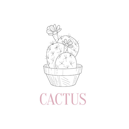 pencil plant: Cactus Home Plant Hand Drawn Realistic Detailed Sketch In Classy Simple Pencil Style On White Background Illustration