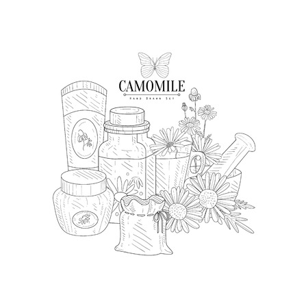 camomile tea: Camomile Natural Product Hand Drawn Realistic Detailed Sketch In Classy Simple Pencil Style On White Background