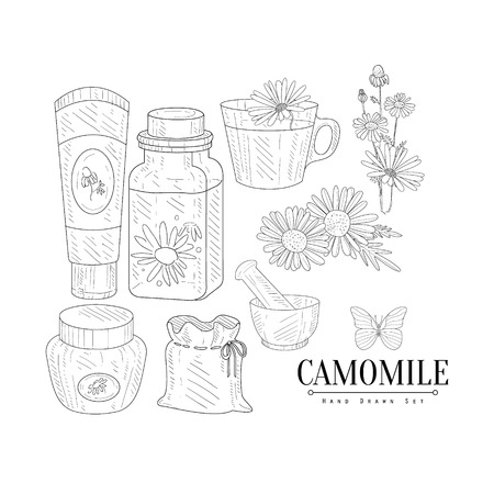 camomile tea: Camomile Cosmetics And Tea Hand Drawn Realistic Detailed Sketch In Classy Simple Pencil Style On White Background