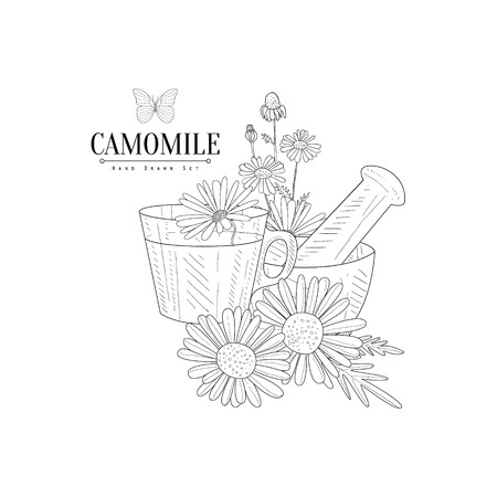 camomile tea: Camomile Tea, Pestle And Mortar Hand Drawn Realistic Detailed Sketch In Classy Simple Pencil Style On White Background