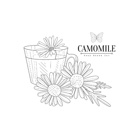 camomile tea: Camomile Herbal Tea Hand Drawn Realistic Detailed Sketch In Classy Simple Pencil Style On White Background
