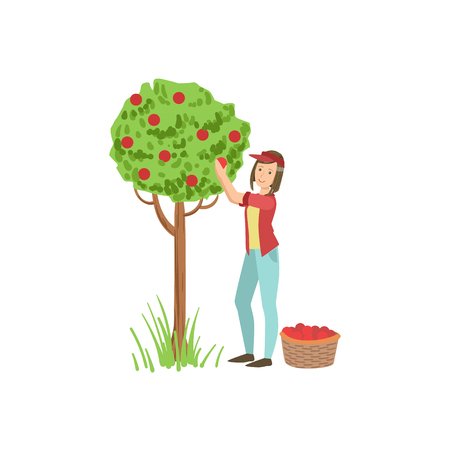 picking up: Woman Picking Up Apples From Tree Simple Childish Flat Colorful Illustration On White Background Illustration