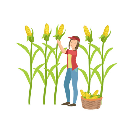 collecting: Woman Collecting Ripe Corn Simple Childish Flat Colorful Illustration On White Background