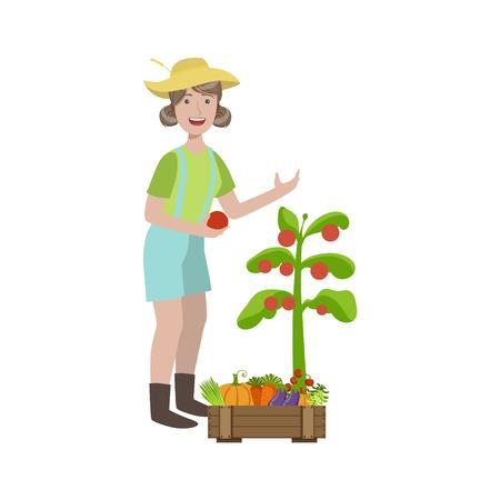 berenjena: Mujer recogiendo tomates maduros en el jardín infantil simple ilustración colorida plana en el fondo blanco Vectores