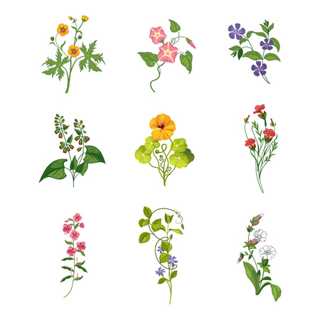 nasturtium: Wild Flowers Hand Drawn Set Of Detailed Illustrations. Herbs And Plants Realistic Artistic Drawings Isolated On White Background. Illustration