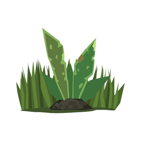 Tropical Plant With Big Leaves Jungle Landscape Element. Simple Tropical Forest Object Illustration Isolated On White Background. Illustration