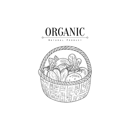 Wicker Basket With Organic Vegetables Hand Drawn Realistic Sketch. Hand Drawn Detailed Contour Illustration On White Background.