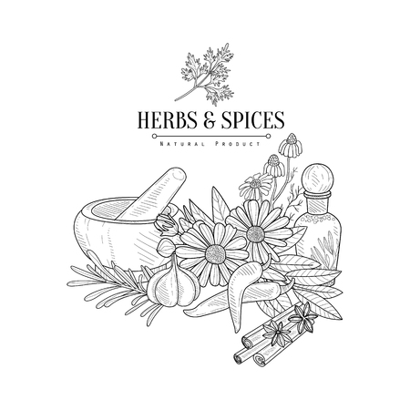 Herbs And Spices Hand Drawn Realistic Sketch. Artistic Pencil Detailed Contour Illustration On White Background.