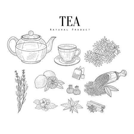 leaf illustration: Natural Ingredients And Tea Isolated Hand Drawn Realistic Sketches. Artistic Pencil Detailed Contour Illustration On White Background.