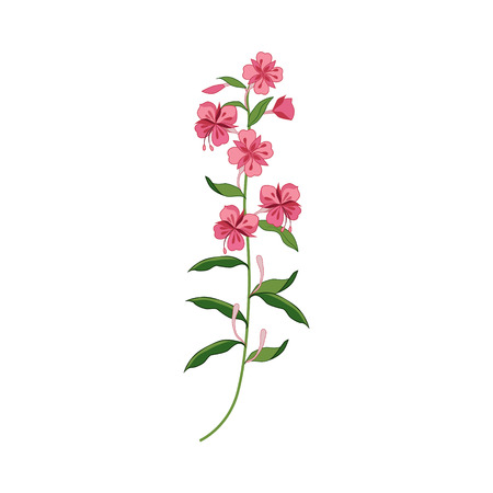 precise: Willowed Wild Flower Hand Drawn Detailed Illustration. Plant Realistic Artistic Drawing Isolated On White Background.