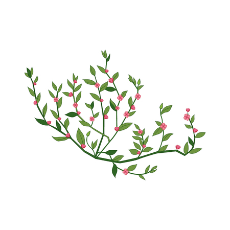 Tiny Pink Wild Flower Hand Drawn Detailed Illustration. Plant Realistic Artistic Drawing Isolated On White Background.