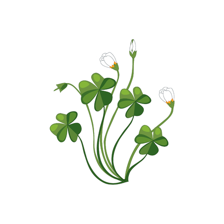 wild flower: Shamrock Wild Flower Hand Drawn Detailed Illustration. Plant Realistic Artistic Drawing Isolated On White Background.