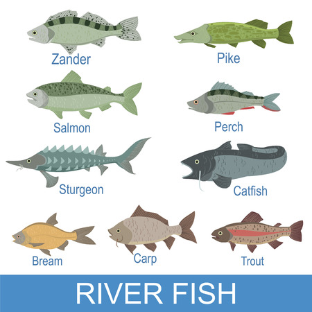 dorsal: River Fish Identification Slate With Names. Realistic Infographic Illustration In Simple Style On White Background.