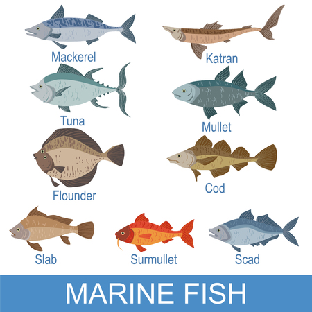 Marine Fish Identification Slate With Names. Realistic Infographic Illustration In Simple Style On White Background. Illustration