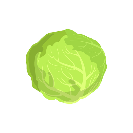 Cabbage Product Rich In Folic Acid. Simple Colorful Flat Illustration On White Background.