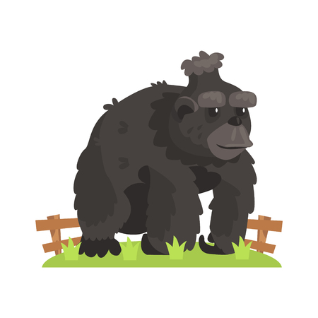 Large Black Gorilla Wih Scruffy Fur Standing On Green Grass Patch In Open Air Zoo Enclosure. Wild Animal Enclosed In Outdoor Zoological Park Funky Style Illustration On White Background. Illustration