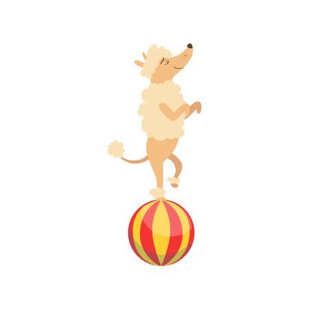 Circus Trained Poodle Dog Animal Artist Performing Balancing On The Ball Stunt For The Circus Show. Illustration