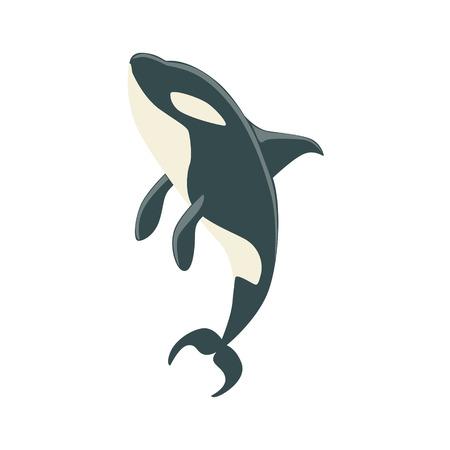 Orca Schwarzweiß Arktis Killerwal Schwimmen, realistische Wassersäugetier Vektorzeichnung. Marinetier in charakteristischen Körperlage Cartoon Illustration.