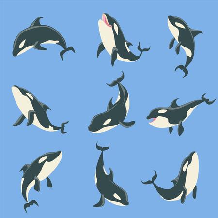 Arctic orca cuerpo diferente Posiciones conjunto de ilustraciones. Colección De Marine Animal Stickers En simple estilo realista sobre fondo azul. Ilustración de vector